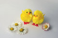Two yellow toy chicks with daisies chickens bellis perennis Stock Photos