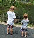 Two Young boys looking at geese swimming in a pond Royalty Free Stock Photo
