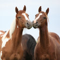 Two young horses together on pasturage Royalty Free Stock Photo