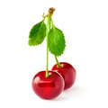 Two yummy cherries on stem isolated on white Royalty Free Stock Image