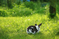 Twocollored rabbit is running away in the grass Royalty Free Stock Photo