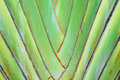 Type banana leaves cascaded like blow background Stock Image