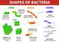 Types of bacteria Royalty Free Stock Photo