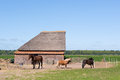 Typical Animal Barn In Holland