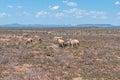 Typical arid Karoo landscape Royalty Free Stock Photo