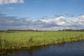 Typical Dutch green landscape with cloudy sky Royalty Free Stock Photo