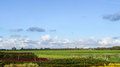Typical dutch landscape with pastures cows and a windmill windmills against beautiful blue sky on the horizon historic beside Royalty Free Stock Photos