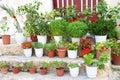 Typical Greek garden