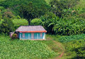 Typical house in the cuban countryside Stock Image
