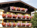 A typical house front in tyrol wonderful colorful flowers at the of mountain village Royalty Free Stock Photography