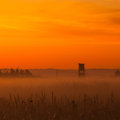 Typical hunters tower on the meadow in morning mist Stock Photography