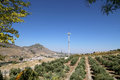 Typical rural landscape with olives and corn fields. Andalusia, Spain Royalty Free Stock Photo