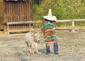 Typical South American Cowboy Royalty Free Stock Image