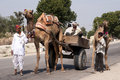 Typical transport with a couple of camels and a wagon rajasthan india circa february the white clothed owner the camel holds Royalty Free Stock Photo