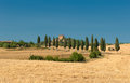Typical tuscan landscape Stock Photography