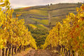 Typical tuscan landscape, vineyard in Chianti Stock Photo