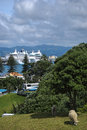 Typical view of new zealand a with sheep and cruise ships in background Royalty Free Stock Photography