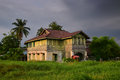 Typical village wooden house in Southeast Asia with long green grass and palm trees around Royalty Free Stock Photo