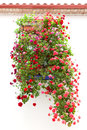 Typical Window decorated Pink and Red Flowers, Mediterranean Eur Royalty Free Stock Image