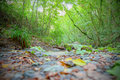 Typical woodland path of mediterranean undergrowth in tuscany shallow dof Stock Image
