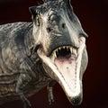 A Tyrannosaurus Rex attack on dark background . Royalty Free Stock Photo