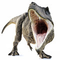 A Tyrannosaurus Rex attack on an isolated white background . Royalty Free Stock Photo