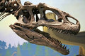 Tyrannosaurus rex dinosaur head skeleton of a Royalty Free Stock Photo