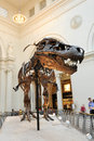 Tyrannosaurus Rex at Field Museum in Chicago Royalty Free Stock Images