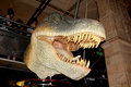 Tyrannosaurus rex london england circa july model head of a in the natural history museum london Royalty Free Stock Image