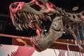 Tyrannosaurus Rex skeleton at the museum Royalty Free Stock Photo