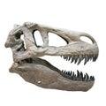 Tyrannosaurus Rex skull Royalty Free Stock Photo