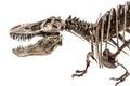 Tyrannosaurus Rex T-Rex Dinosa...