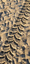 Tyre track in wet sand Royalty Free Stock Photo