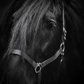 Tysta ned av en häst Arkivbild