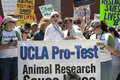 UCLA Pro-Test Royalty Free Stock Image