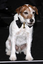 Uggie arrives at the 84th Academy Awards Stock Photos