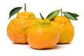 Ugly tangerine on a white background Stock Photos