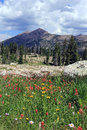 Uinta wildflowers in the mountains utah usa Stock Photos