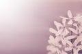 Uitstekend kijk foto van bloemen serviceberry Stock Foto's