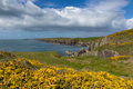 Uk coast wales path pembrokeshire near from caerfai bay to st non s bay in the national park towards ramsey island follows Stock Photo