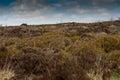 Uk habitat moorland upland and scattered trees Stock Photos