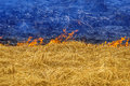 Ukraine afire burning yellow grass and blue smoke and ashes like the ukrainian flag line of fire shares a peaceful territory and Royalty Free Stock Photo