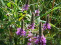 Ukraine beautiful flowers on a fast river Stock Photos