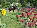 Ukraine carpathian horse on a background of rue and sunflower Stock Photos