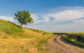 Ukrainian rural landscape with lonely apricot tree on a hill and country road Stock Image