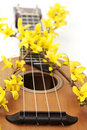 Ukulele with flower close up Royalty Free Stock Photo