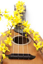 Ukulele with flower close up Stock Image