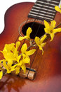 Ukulele with flower close up Royalty Free Stock Photography