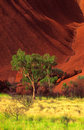 Uluru and tree Stock Photos