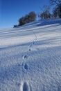 Um dia de inverno ice-cold agradável Imagens de Stock